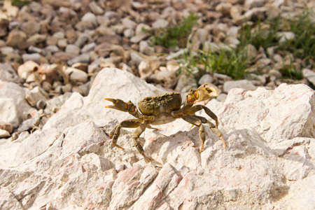 Little Crab photo