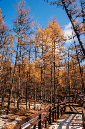 Mordaga autumn scenery photo