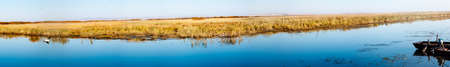 wetlands: Wetlands Seagull(panorama)