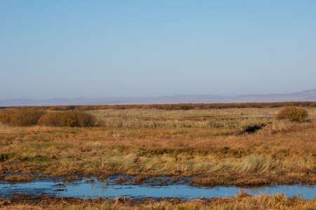 wetlands: Wetlands Seagull
