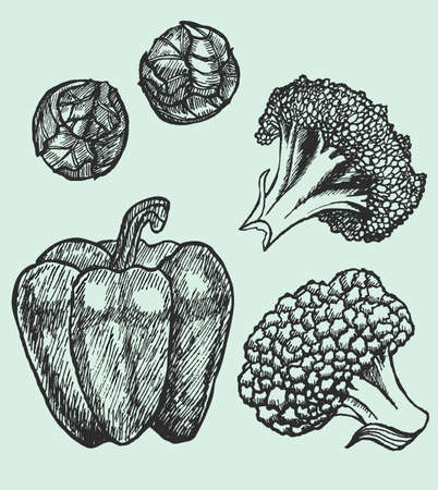 brussels:  set of hand-drawn vegetables - Brussels sprouts, cauliflower, pepper and broccoli