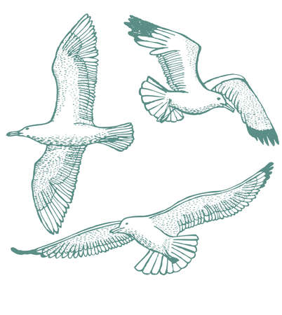 vector hand-drawn set of seagulls on light background