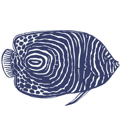 angelfish: hand-drawn graphic illustration of emperor angelfish