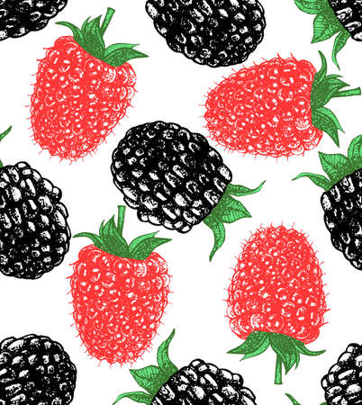 blackberry: vector hand-drawn seamless background with raspberry and blackberry Illustration