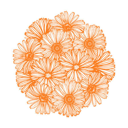 composition with calendula flowers Illustration