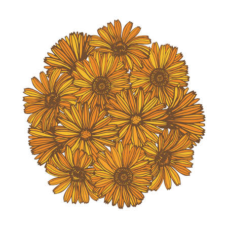 calendula: composition with calendula flowers Illustration