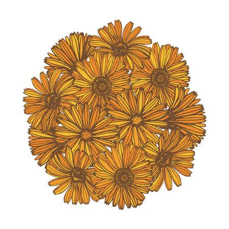 antiseptic: composition with calendula flowers Illustration