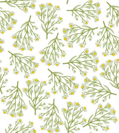 vector hand drawn chamomile background