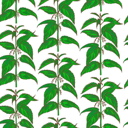 A vector hand drawn colored nettle background