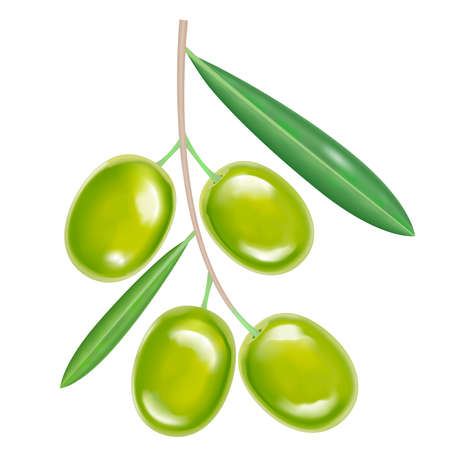 Vector green realistic isolated olives