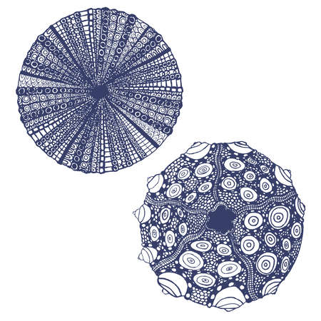 vector set of hand drawn urchins