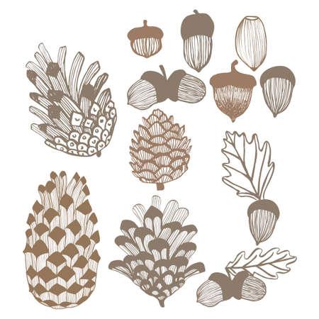 コーンとどんぐりセット。手には、秋と冬のデザイン要素が描画されます。ベクトル図