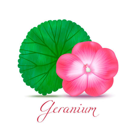 Geranium Flower and Leaf. Realistic Elements for Labels of Cosmetic Skin Care Product Design. Vector Isolated Illustration
