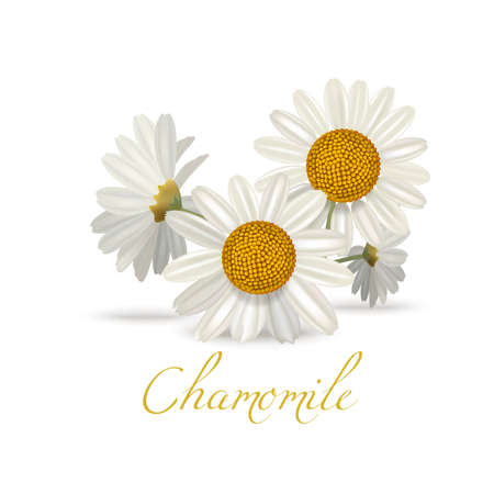 Chamomile Flowers. Realistic Elements for Labels of Cosmetic Skin Care Product Design. Vector Isolated Illustration