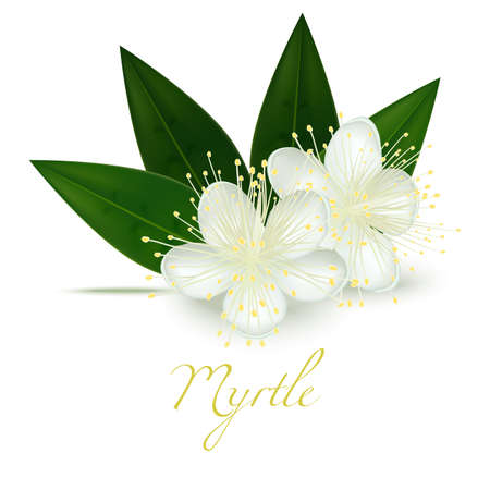 Myrtle Flowers and Leaves. Realistic Elements for Labels of Cosmetic Skin Care Product Design. Vector Isolated Illustration Vettoriali
