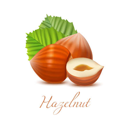 Hazelnut Nuts and Leaves. Realistic Elements for Labels of Cosmetic Skin Care Product Design. Vector Isolated Illustration Illustration
