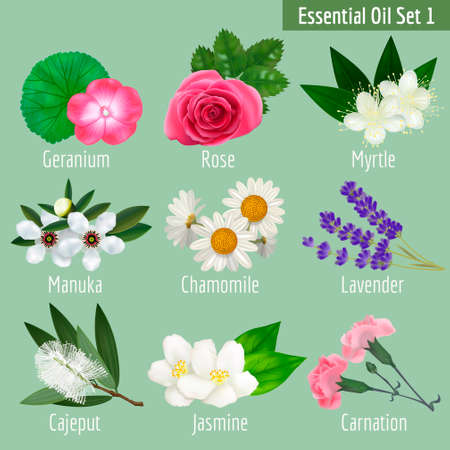 Essential Oil Set. Realistic Herbal Elements for Labels of Cosmetic Skin Care Product Design. Vectores
