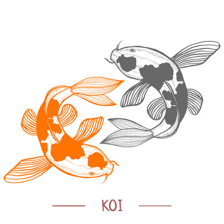 Karp Koi Vector Illustration