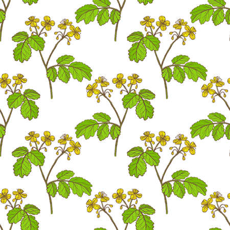 Colored Celandine Pattern in Hand-Drawn Style Illustration