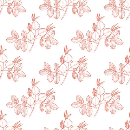 Rose Hip Pattern. Hand Drawn Graphic Background for Surface Design. Vector Illustration of Medicinal Plant