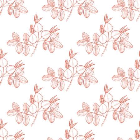Rose Hip Pattern. Hand Drawn Graphic Background for Surface Design. Vector Illustration of Medicinal Plant Illustration