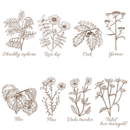 Set of Medicinal Plants in Hand-Drawn Style
