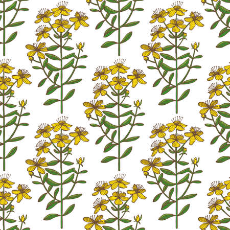 Colored Hypericum Pattern. Hand Drawn Graphic Background for Surface Design. Vector Illustration of Medicinal Plant