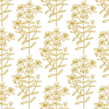 Hypericum Pattern. Hand Drawn Graphic Background for Surface Design. Vector Illustration of Medicinal Plant