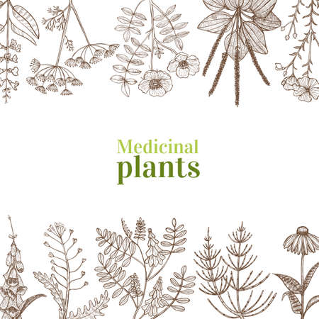 Template with Medicinal Plants. Floral Composition in Hand-Drawn Style for Banners Fliers Posters Surface Design Cosmetic.