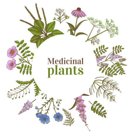 Colored Round Template with Medicinal Plants. Floral Composition in Hand-Drawn Style for Banners Fliers Posters Surface Design Cosmetic. Imagens - 127726531