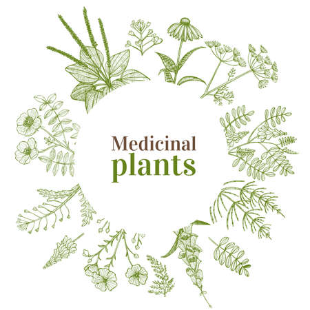 Round Template with Medicinal Plants. Floral Composition in Hand-Drawn Style for Banners Fliers Posters Surface Design Cosmetic. Vector Illustration Çizim