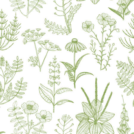Light Pattern with Medicinal Plants. Floral Background in Hand-Drawn Style for Banners Fliers Posters Surface Design Cosmetic.