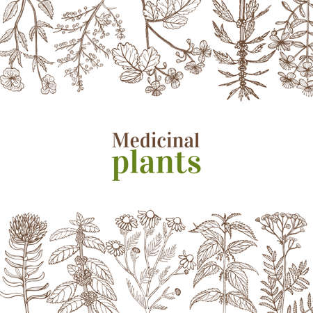 Template with Medicinal Plants. Floral Composition in Hand-Drawn Style for Banners Fliers Posters Surface Design Cosmetic. Vector Illustration Illustration