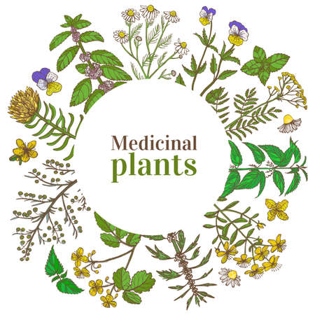 Colored Round Template with Medicinal Plants. Floral Composition in Hand-Drawn Style for Banners Fliers Posters Surface Design Cosmetic. Vector Illustration