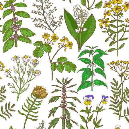 Colored Pattern with Medicinal Plants. Floral Background in Hand-Drawn Style for Banners Fliers Posters Surface Design Cosmetic. Vector Illustration Illustration