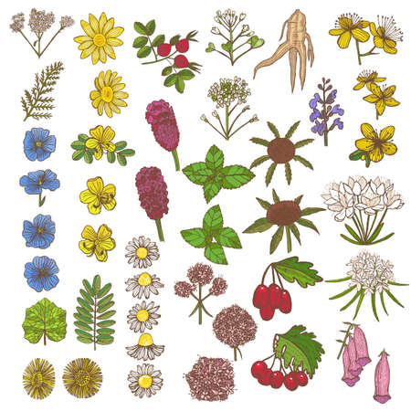 Set of Medicinal Plant Elements. Floral Collection in Hand Drawn Style. Vector Illustration Çizim