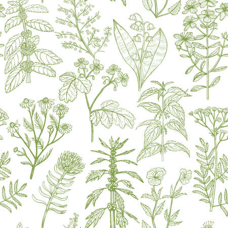 Pattern with Medicinal Plants. Floral Background in Hand-Drawn Style for Banners Fliers Posters Surface Design Cosmetic. Vector Illustration