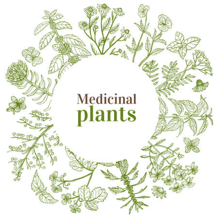 Round Template with Medicinal Plants. Floral Composition in Hand-Drawn Style for Banners Fliers Posters Surface Design Cosmetic. Vector Illustration Ilustração