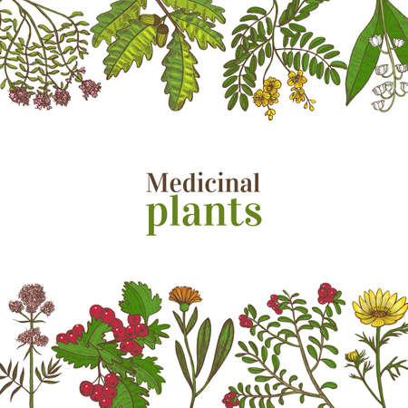 Colored Template with Medicinal Plants. Floral Composition in Hand-Drawn Style for Banners Fliers Posters Surface Design Cosmetic. Vector Illustration