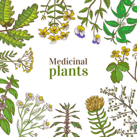 Square Template with Medicinal Plants. Floral Frame in Hand-Drawn Style for Banners Fliers Posters Surface Design Cosmetic. Vector Illustration