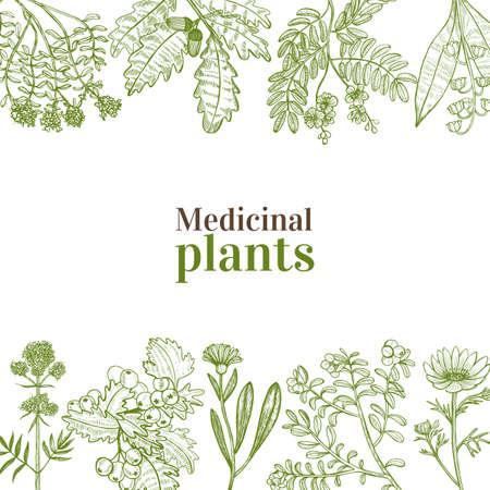Plantilla con Plantas Medicinales. Composición floral en estilo dibujado a mano para pancartas, volantes, carteles, diseño de superficies, cosmética. Ilustración vectorial