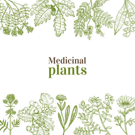 Vorlage mit Heilpflanzen. Blumenkomposition im handgezeichneten Stil für Banner Flyer Poster Oberflächendesign Kosmetik. Vektorillustration