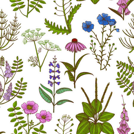Colored Pattern with Medicinal Plants. Floral Background in Hand-Drawn Style for Banners Fliers Posters Surface Design Cosmetic. Векторная Иллюстрация