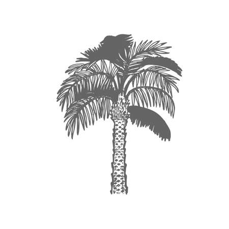Palm Tree. Exotic Plant in Hand-Drawn Style for Surface Design Banners Fliers Prints Posters Menu Web. Vector Illustration