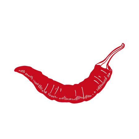 Chili Pepper. Spice in Hand-Drawn Style for Surface Design Banners Fliers Prints Posters Web. Vector Illustration Ilustração