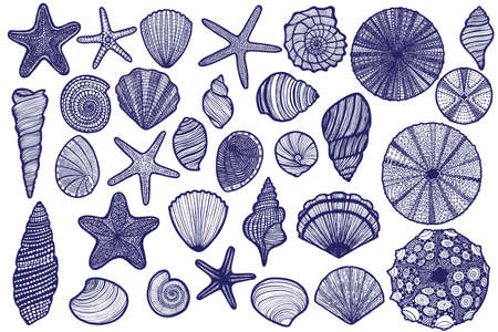 Isolated Seashell Starfish Urchin Set in Hand Drawn Style