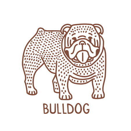 Isolated Bulldog in Hand Drawn Doodle Style
