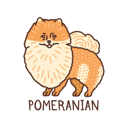 Isolated Pomeranian in Hand Drawn Doodle Style