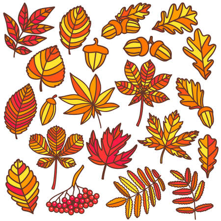 Isolated Autumn Leaves in Hand Drawn Doodle Style