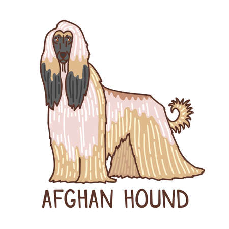 Isolated Afghan Hound in Hand Drawn Doodle Style